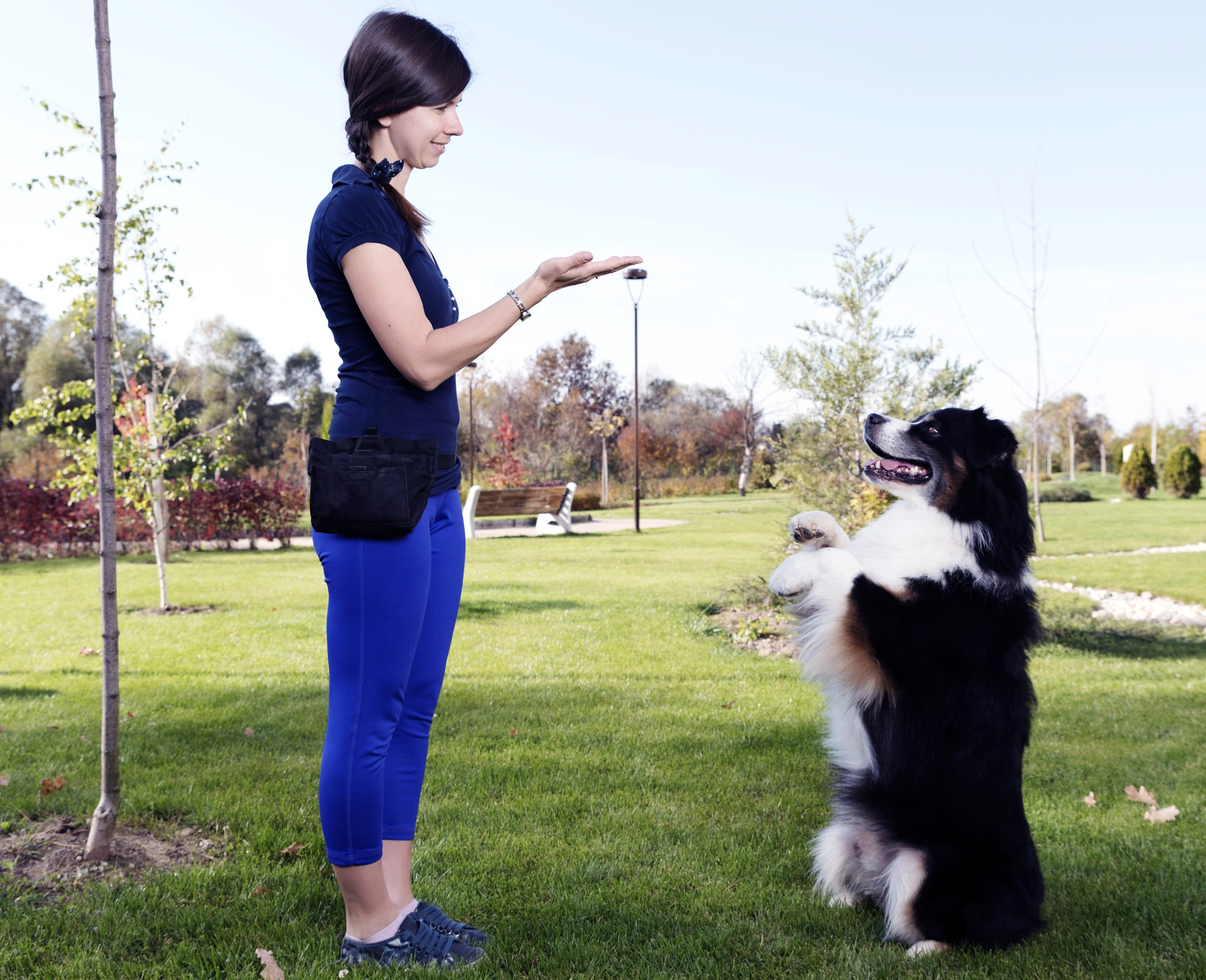 The Basics When It Comes To Dog Training