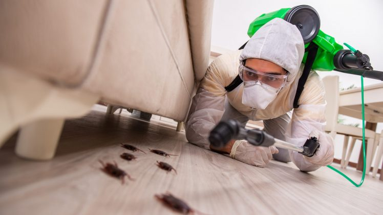 Rid Your Home Of Pests With These Simple Tips